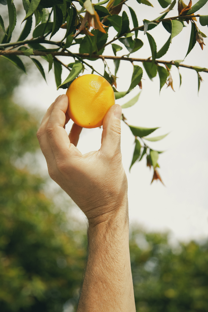 alarm management blog 4 low hanging fruit